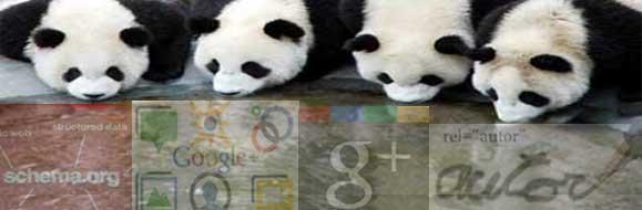 osos panda bebiendo google+, rel=autor, schema.org...