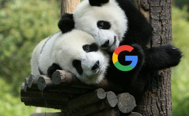 Panda y Google plus