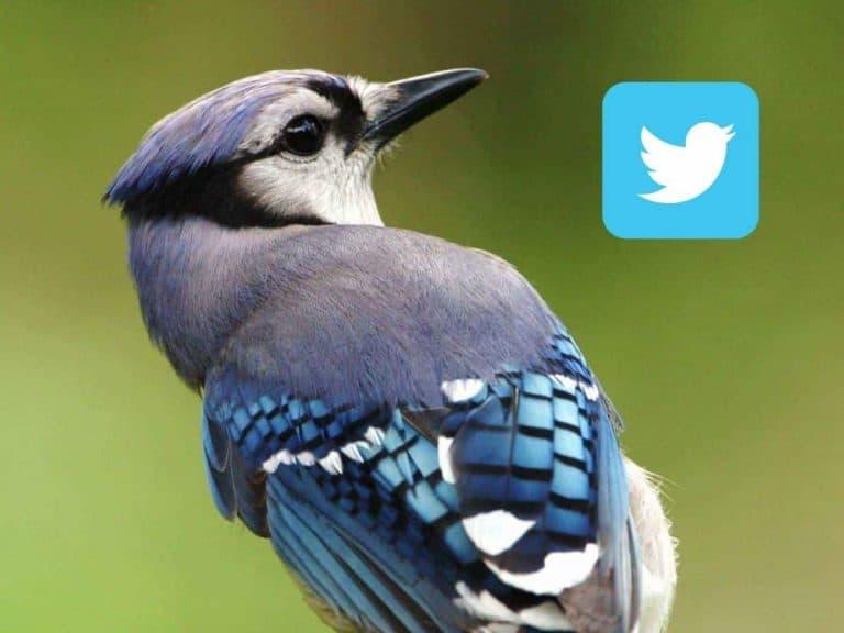 suspenso-en-twitter